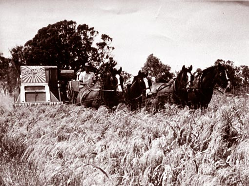 Draft horse village view topic duneske clydesdales says hi from