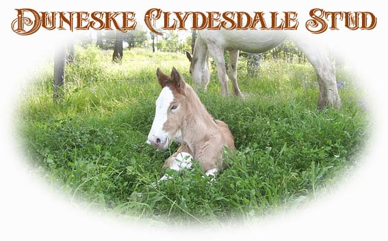 Occasionally, they have clydesdale horses for sale, but the past few years